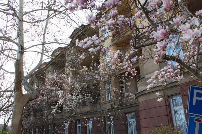 podolska_porodnice-magnolie